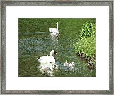 Framed Print featuring the photograph Swans And Turtles by Teresa Schomig