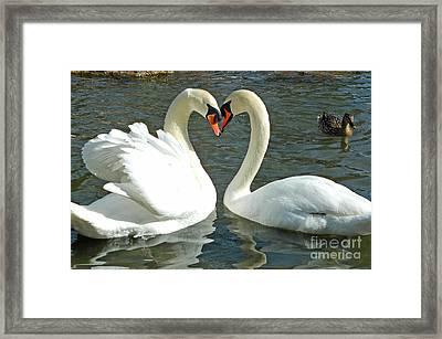 Swans At City Park Framed Print