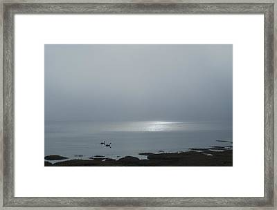 Swans At Sunrise Framed Print