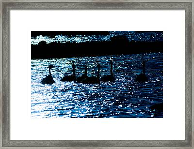 Swans By The Ocean Framed Print