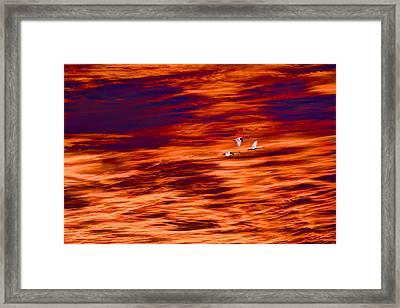 Swans Flying Framed Print