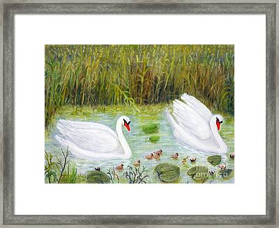 Swans  Framed Print by Georgios Kollidas