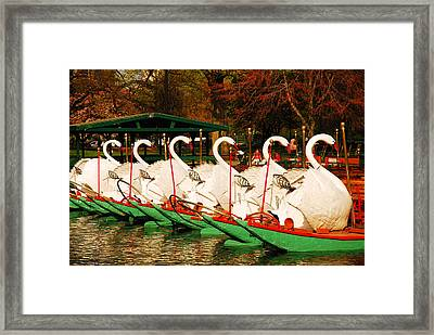 Swans In Boston Common Framed Print by James Kirkikis