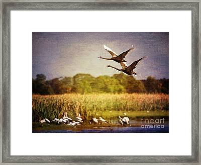 Swans In Flight Framed Print