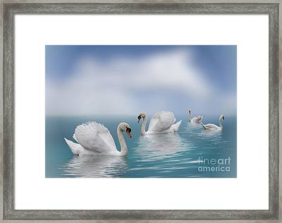 Swans In Paradise Framed Print by Shirley Mangini