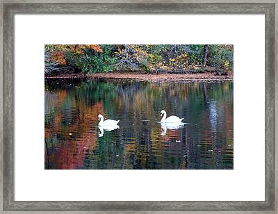 Framed Print featuring the photograph Swans by Karen Silvestri