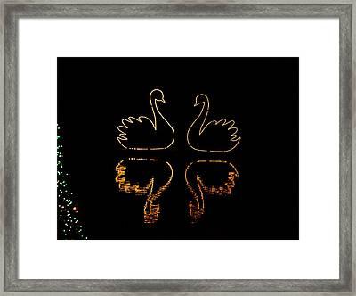 Swans Lights Framed Print by Gloria Pasko