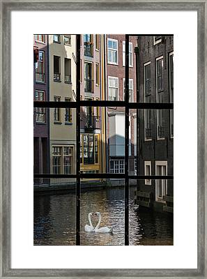 Swans Love Amsterdam Framed Print by Joan Carroll