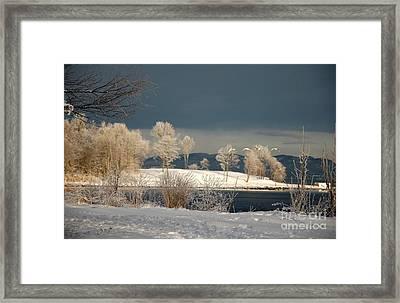 Swans On A Frosty Day Framed Print by Randi Grace Nilsberg