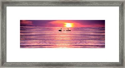 Swans On The Lake Framed Print by Jon Neidert