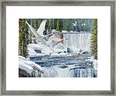Swans Over Collonade Falls Framed Print by Steve Spencer