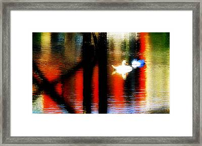 Framed Print featuring the photograph Swans Sojourn by Aurelio Zucco