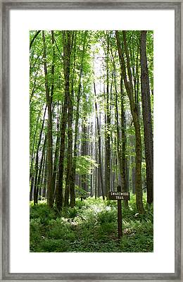 Swartwood Trail Framed Print by Jennifer Compton