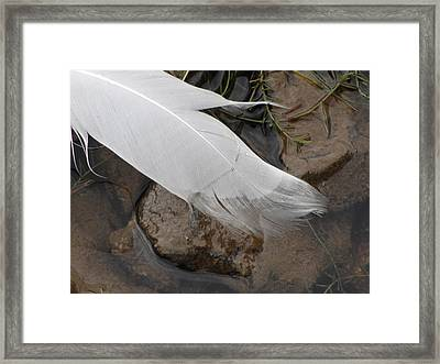 Framed Print featuring the photograph Sway With The Movement Of The Water by Tiffany Erdman