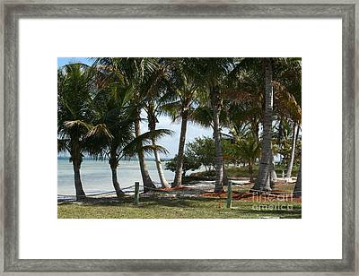 Swaying In The Breeze Framed Print by Rosemary Aubut