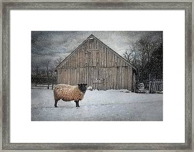Sweater Weather Framed Print by Robin-Lee Vieira