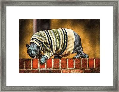 Sweatered Cat Framed Print