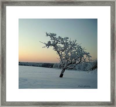 Swedish Winter Framed Print by Carola Ann-Margret Forsberg