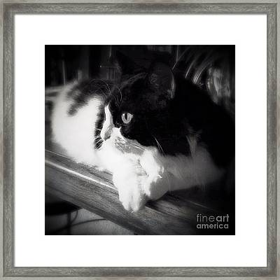 Sweet Alice Framed Print by Beth Williams