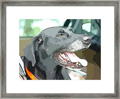 Sweet Amos Framed Print by Alice Gipson