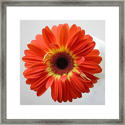 Framed Print featuring the photograph Sweet And Simple by Melanie Moraga
