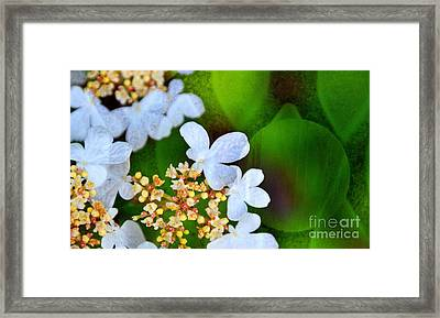 Framed Print featuring the photograph Sweet And Sour by Darla Wood