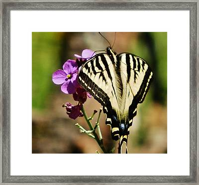 Sweet Attraction Framed Print by VLee Watson