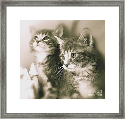 Sweet Babies Framed Print