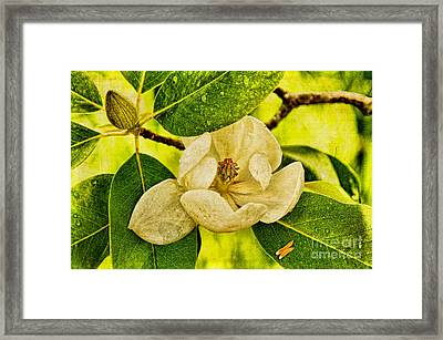 Sweet Bay Magnolia After The Rain Framed Print by Lois Bryan