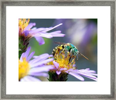Sweet Bee Framed Print
