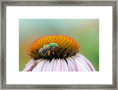Sweet Bee Framed Print by Juergen Roth