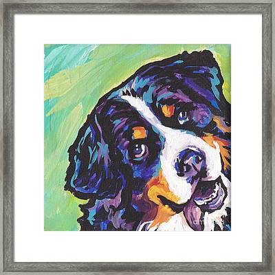 Sweet Berner Framed Print by Lea S