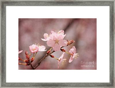 Sweet Blossom Framed Print by LHJB Photography