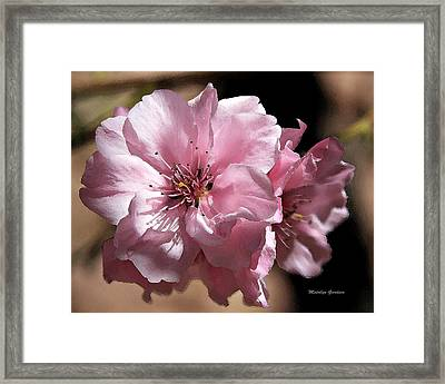 Sweet Blossoms Framed Print