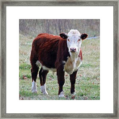 Sweet Bovine Face In Pastel Framed Print by Suzanne Gaff