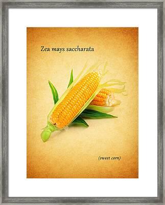 Sweet Corn Framed Print by Mark Rogan