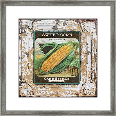 Sweet Corn On Vintage Tin Framed Print by Jean Plout