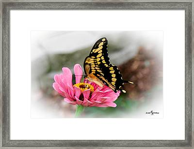 Sweet Delicacy Framed Print