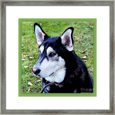 Sweet Dog Face Framed Print by Carol Groenen
