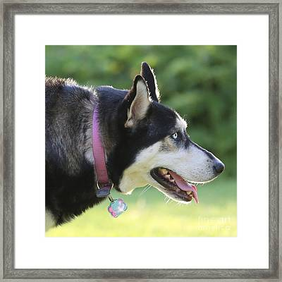 Sweet Dog Profile Framed Print by Carol Groenen