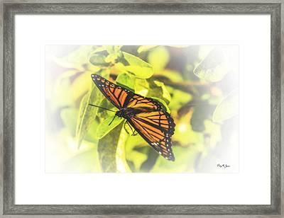 Sweet Dream Framed Print by Barry Jones