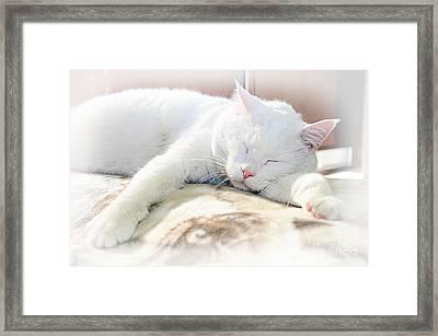 Sweet Dreams Framed Print by Andee Design