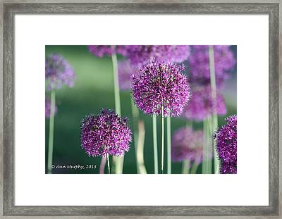 Sweet Dreams Framed Print by Ann Murphy