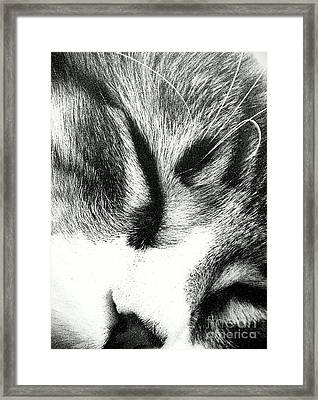Framed Print featuring the photograph Sweet Dreams by Jacqueline McReynolds