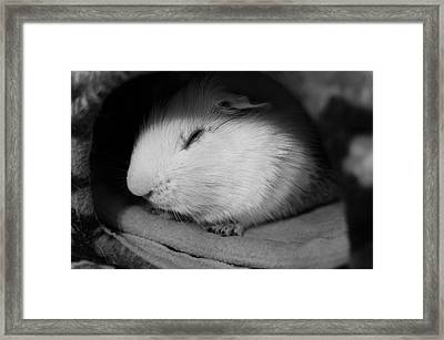 Sweet Dreams Framed Print by Luke Moore