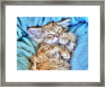 Sweet Dreams Tilly Framed Print by Linda Rich