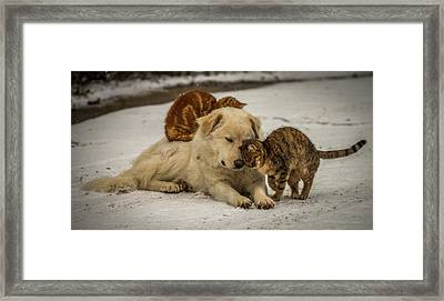 Sweet Effusions Framed Print by Riccardo Lucidi