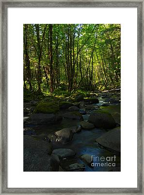 Sweet Evening  Framed Print by Tim Rice
