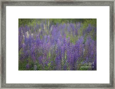Sweet Floral Lullaby For You . Framed Print by  Andrzej Goszcz