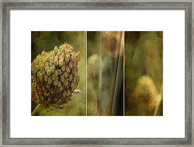 Sweet Garlic Framed Print